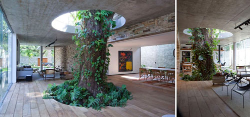 معماری اطراف درخت