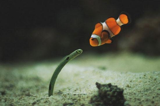 تصاویر زیبای حیات وحش