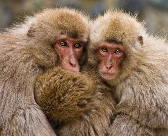 تصاویر دیدنی از میمون ها