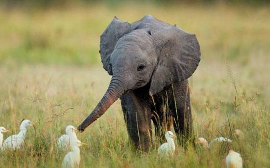 تصاویر دیدنی دنیای حیوانات