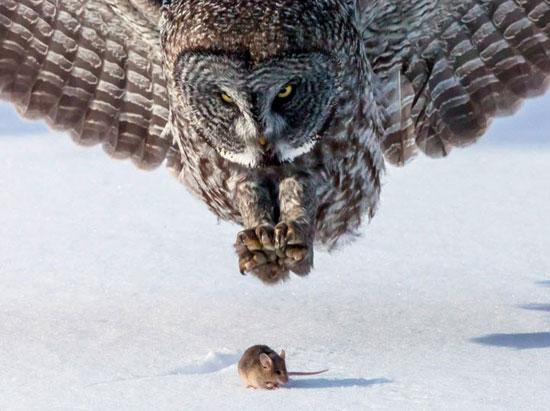 عکس - لحظه های دیدنی - دنیای حیوانات