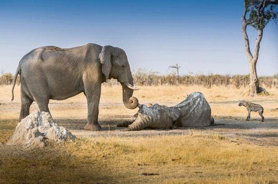 تصاویر زیبای دنیای حیوانات وحشی