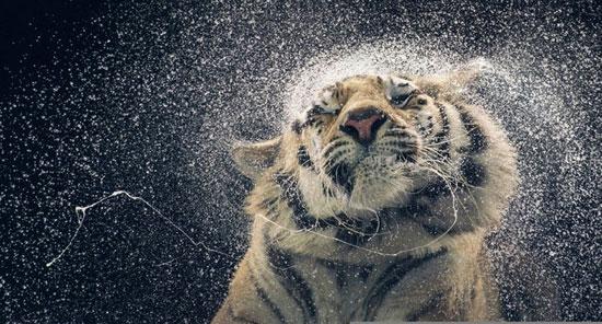 تصاویر زیبای حیوانات وحشی