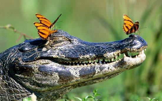 تصاویر دیدنی حیات وحش