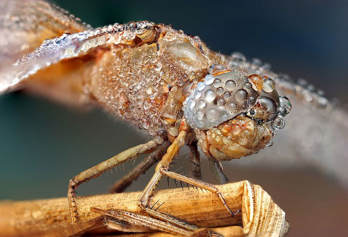 عکاسی ماکرو خیره کننده از حشرات توسط اوندری پاکان