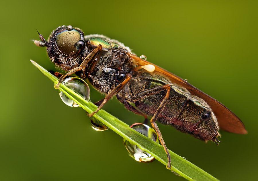 عکس ماکرو حشرات - ماکروگرافی