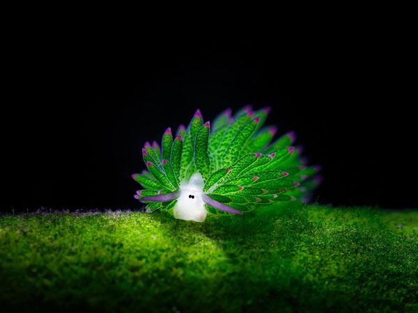 موجودات عجیب و زیبای دریاها