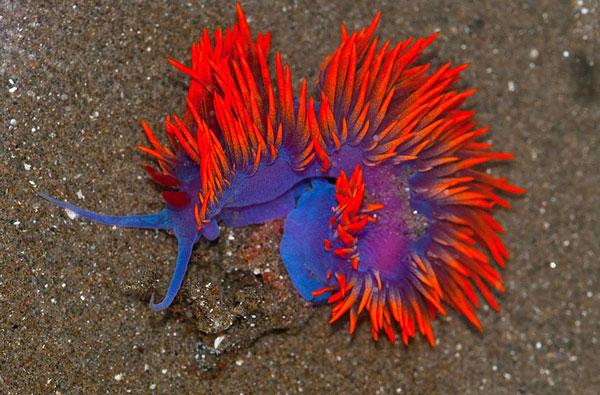 تصاویر دیدنی عکس و کلیپ  , موجودات دریایی عجیب و زیبا + تصاویر