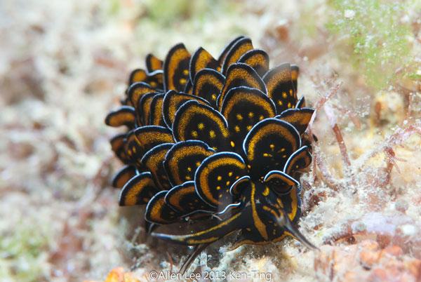 موجودات دریایی عجیب و زیبا