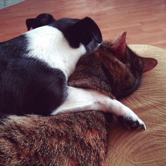 عکس های دیدنی دوستی سگها و گربه ها