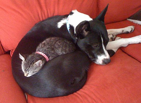 دوستی جالب سگ ها و گربه های
