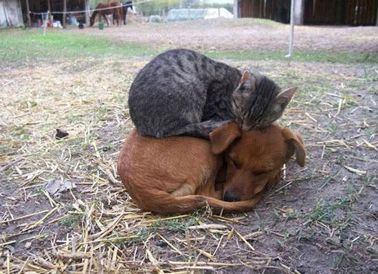 عکسهایی برای اثبات دوستی گربه ها و سگها