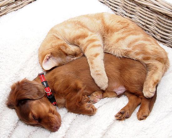 عکس های جالب از دوستی سگ و گربه