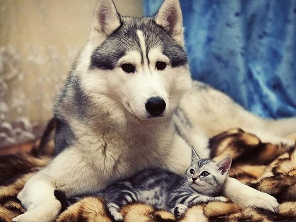 عکسهای تماشایی برای اثبات دوستی سگ و گربه