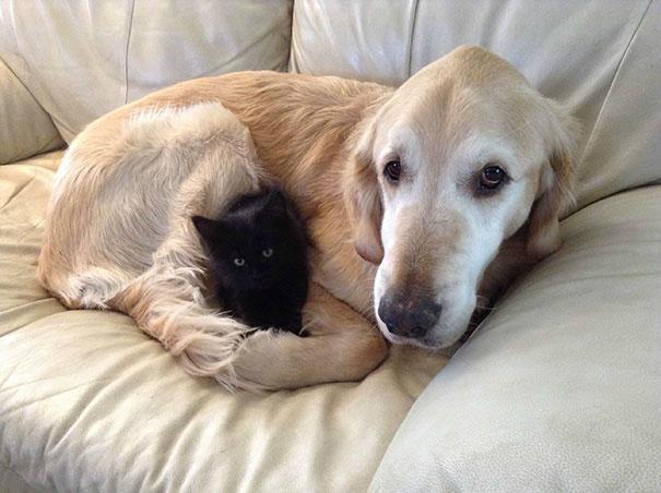دوستی سگ ها و گربه ها