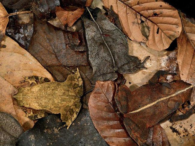 تصاویر دیدنی عکس و کلیپ  , جالبترین قورباغه ها و وزغ های دنیا