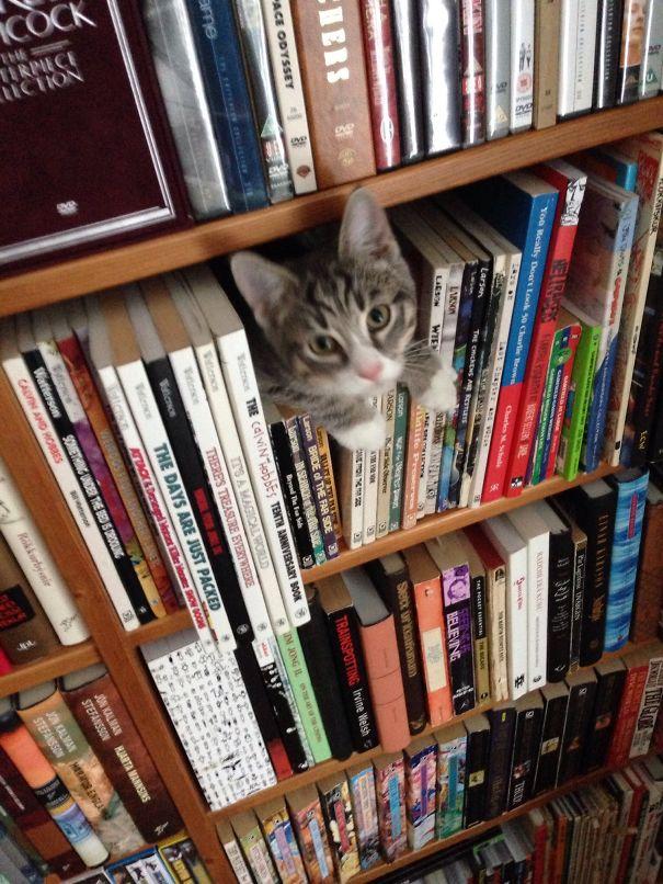 عکسهای خنده دار از رفتارهای گربه های بامزه