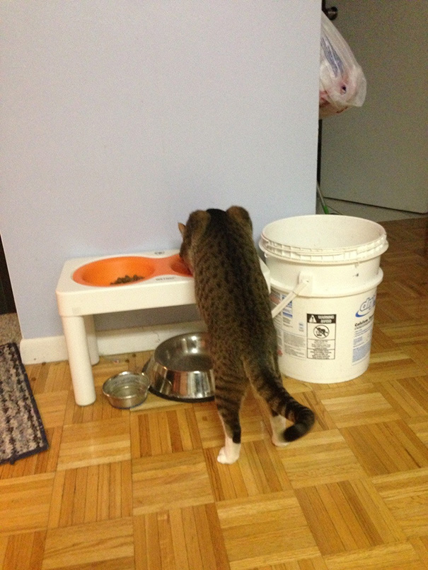 عکسهای خنده دار از رفتار گربه های بامزه