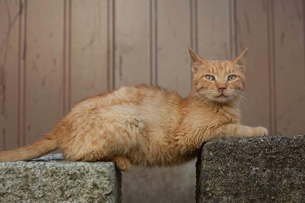عکسهای خنده دار از رفتارهای بامزه گربه ها