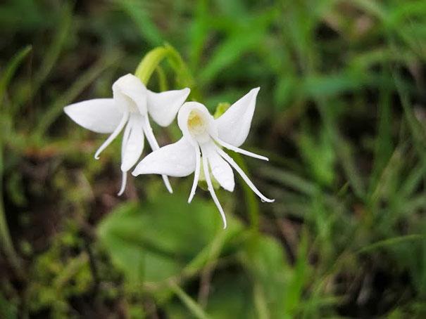 گلهای عجیب , شگفت انگیزترین گلهای جهان