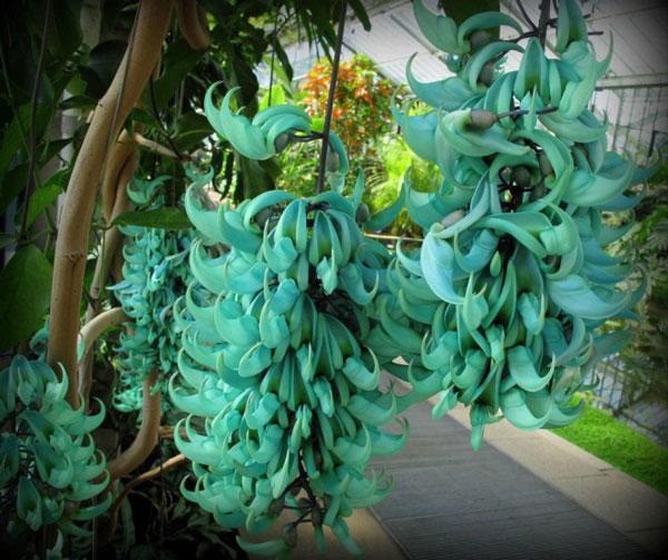 گلهای عجیب , شگفت انگیزترین گل های جهان