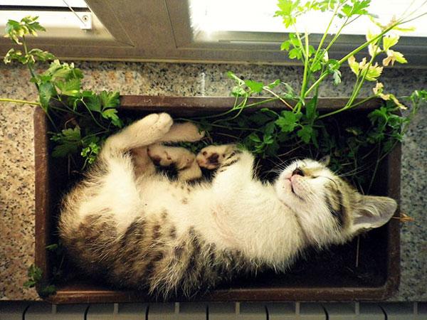 گربه های شما هم اینجورین ؟؟