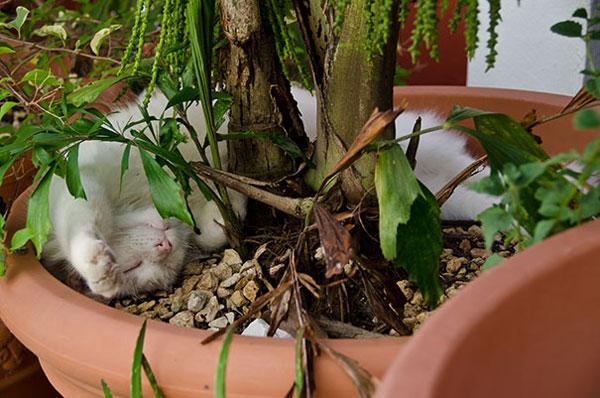 عکس گربه - عکس خنده دار - گربه های خوابالو عکس گربه - عکس خنده دار - گربه های خوابالو