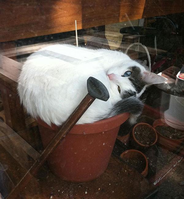 عکس گربه - عکس خنده دار - گربه های خوابالو