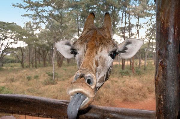 عکسهای خنده دار - عکس های جالب - تصاویر طنز حیات وحش