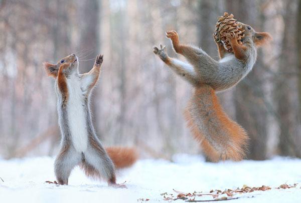 عکس های خنده دار - عکس های جالب - تصاویر طنز حیات وحش
