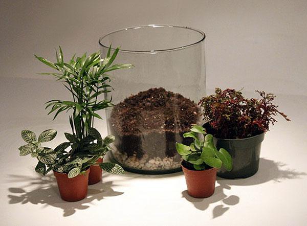 آموزش ساخت تراریوم (باغ شیشه ای)