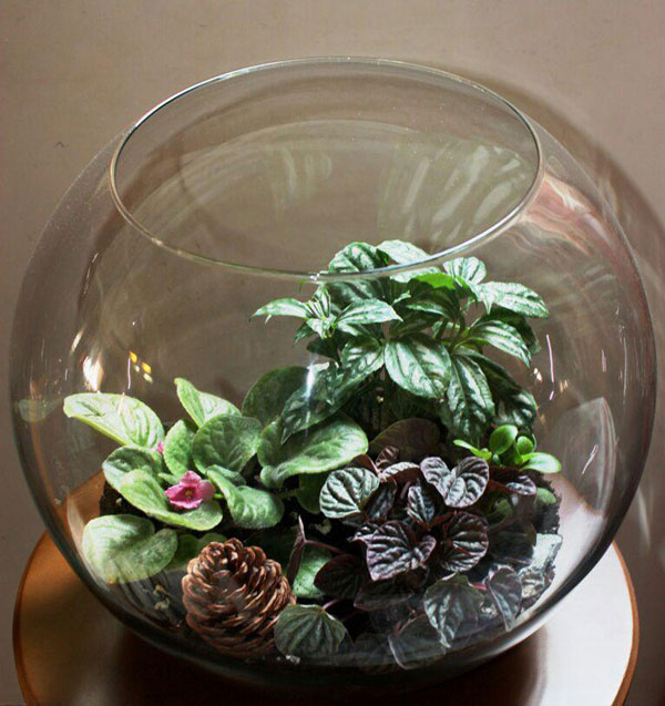 آموزش ساخت تراریوم (باغ شیشه ای) - مجله تصویر زندگیآموزش ساخت تراریوم (باغ شیشه ای)
