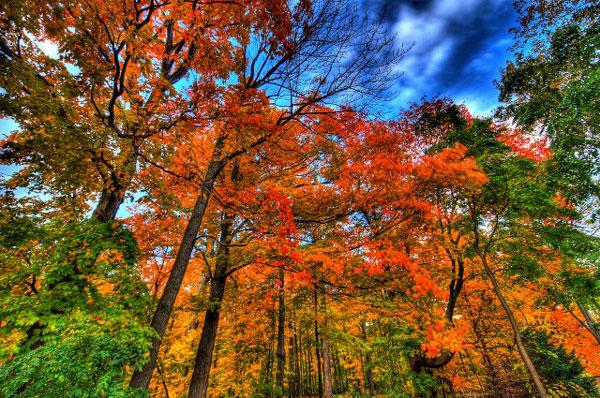 علت تغییر رنگ برگ درختان در پاییز چیست؟