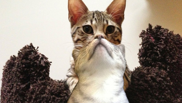 شکار لحظه های گربه های ملوس و شیطون