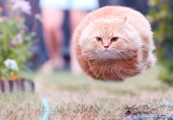 تصاویر دیدنی از گربه های ملوس