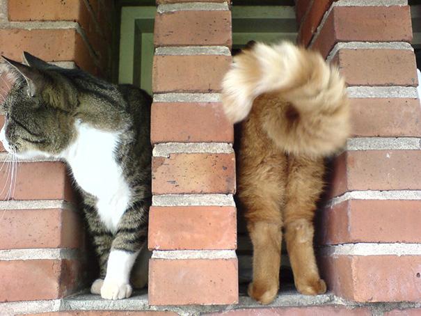 شکار لحظه های گربه های دوست داشتنی
