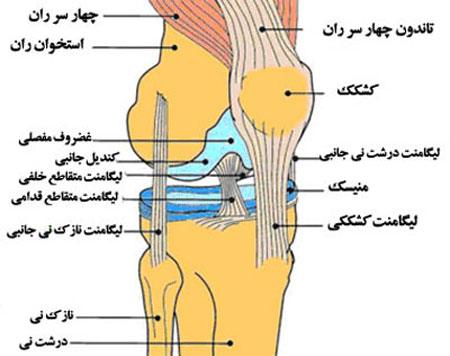 زانو درد - آناتومی زانو