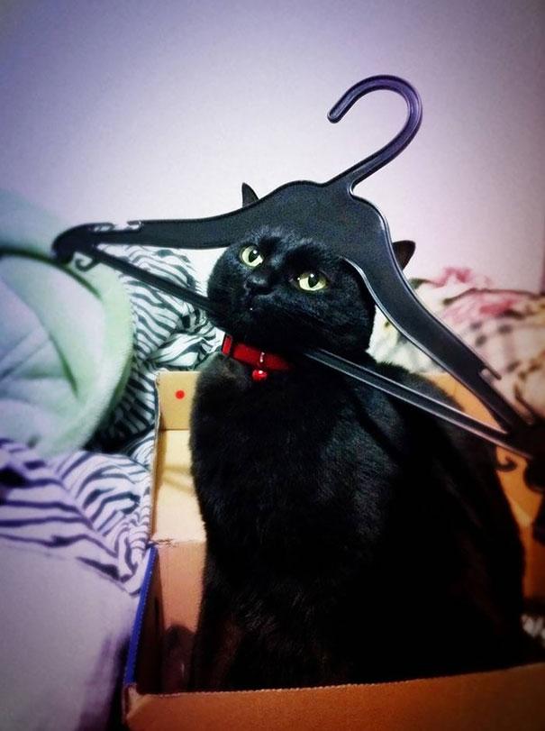 عکس های خنده دار - گربه های شیطون