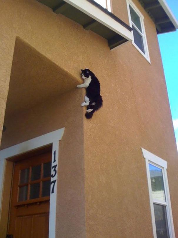 گربه های گرفتار در مخمصه - عکس هاي ديدني
