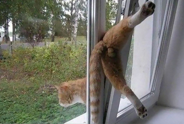 گربه هاي گرفتار در مخمصه - عکس هاي ديدني