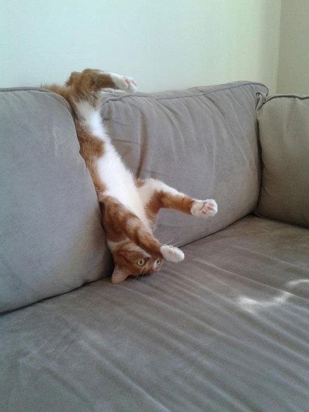 تصاویر طنز عکس و کلیپ  , عکس های دیدنی از گربه های گرفتار در مخمصه