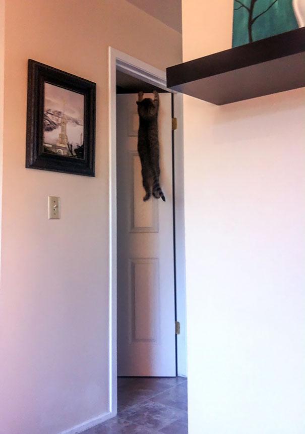 عکس های ديدني - تصاوير طنز - گربه هاي شرور