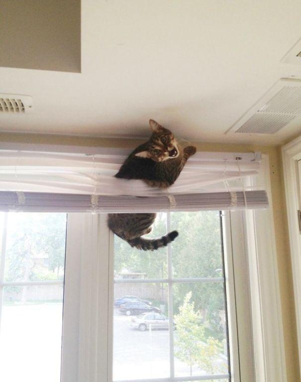 عکس های دیدنی - تصاویر طنز - گربه های شرور