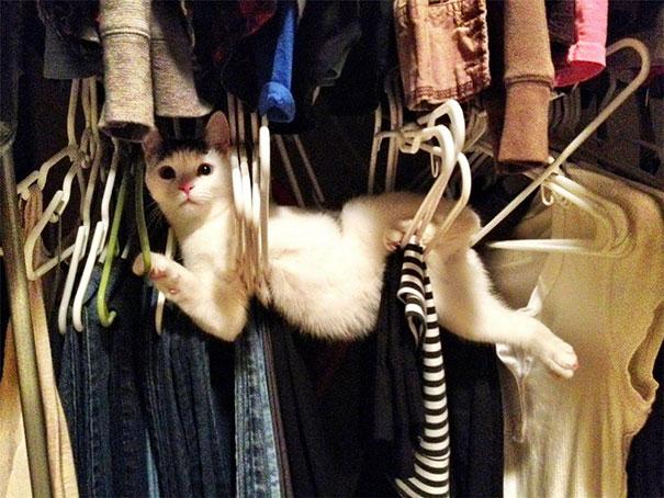 عکس هاي ديدني - تصاوير طنز - گربه هاي شرور