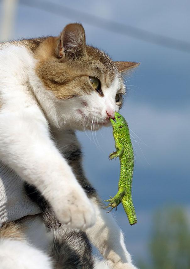 عکس هاي خنده دار - گربه هاي شيطون - شکار لحظه ها