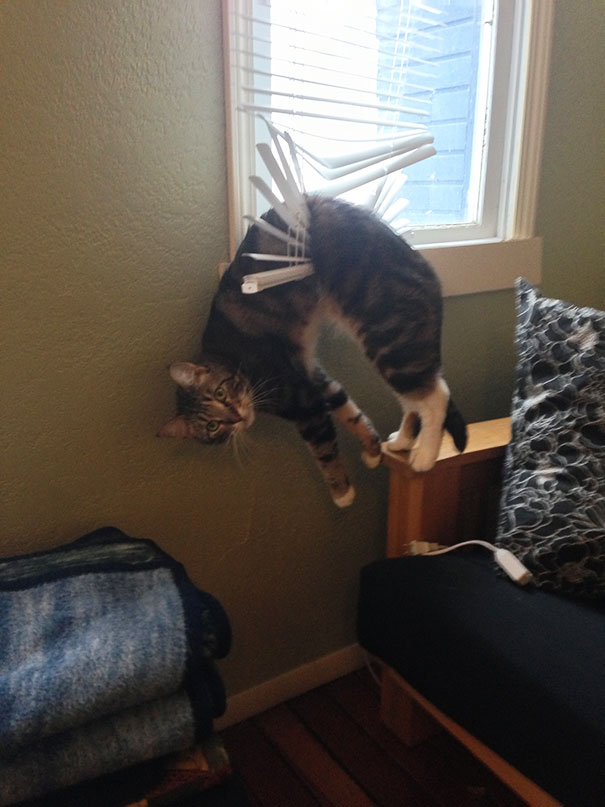 عکس هاي خنده دار - گربه هاي شيطون