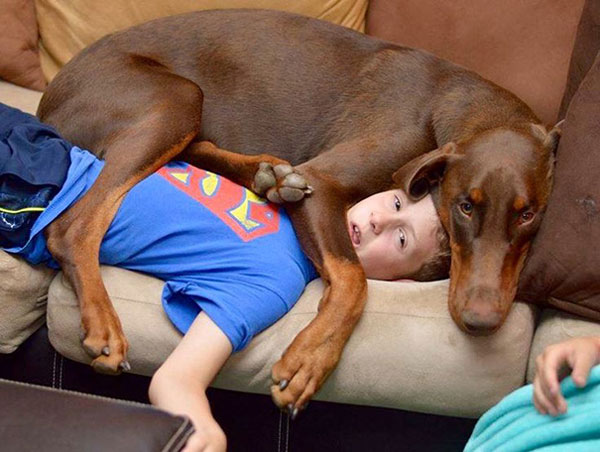 تصاویر طنز عکس و کلیپ  , عکس های خنده دار سگ ها