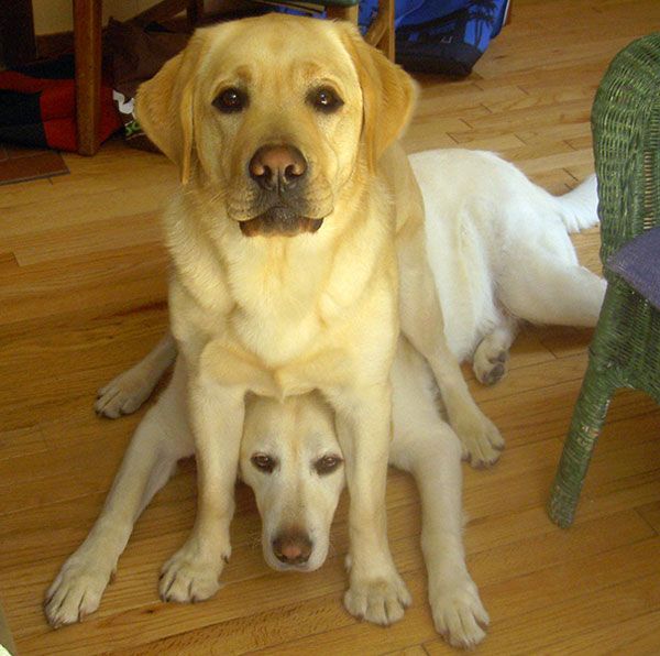 تصاویر بامزه سگ ها - سگ های بامزه