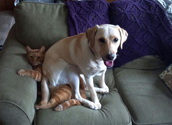 تصاویر خنده دار سگ ها - سگ های بامزه