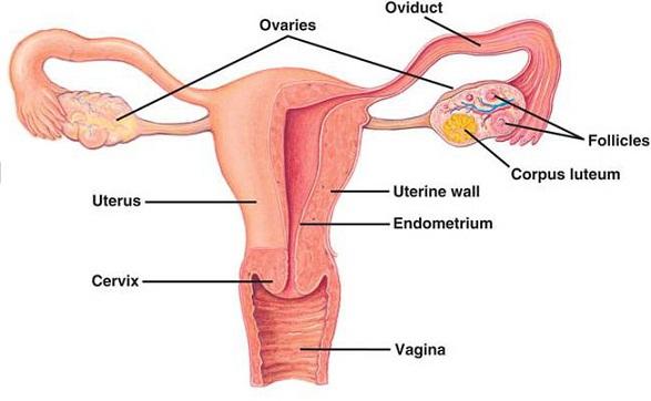 درمان تنبلی تخمدان